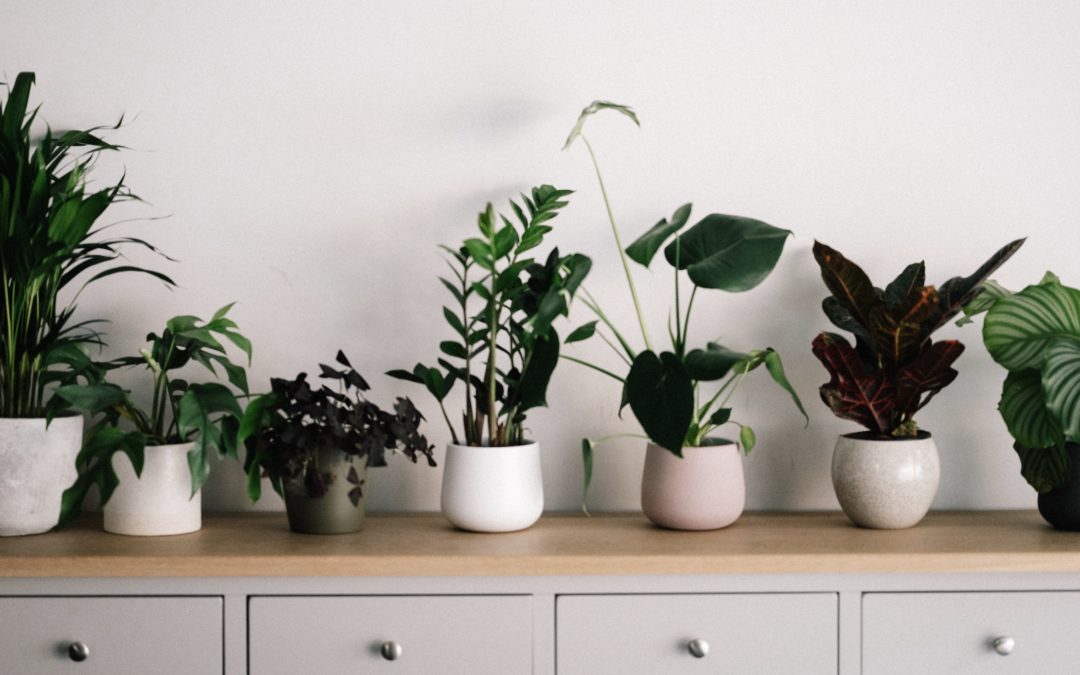 Embrace these green home trends and bring new life to your space with plants.