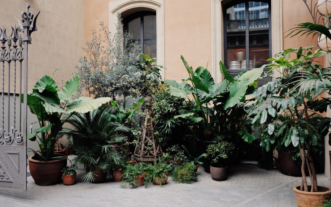 Stayin' alive: Helping your plants live their best life
